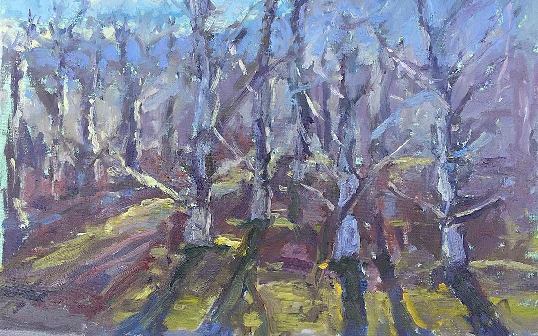 Sun through the orchard