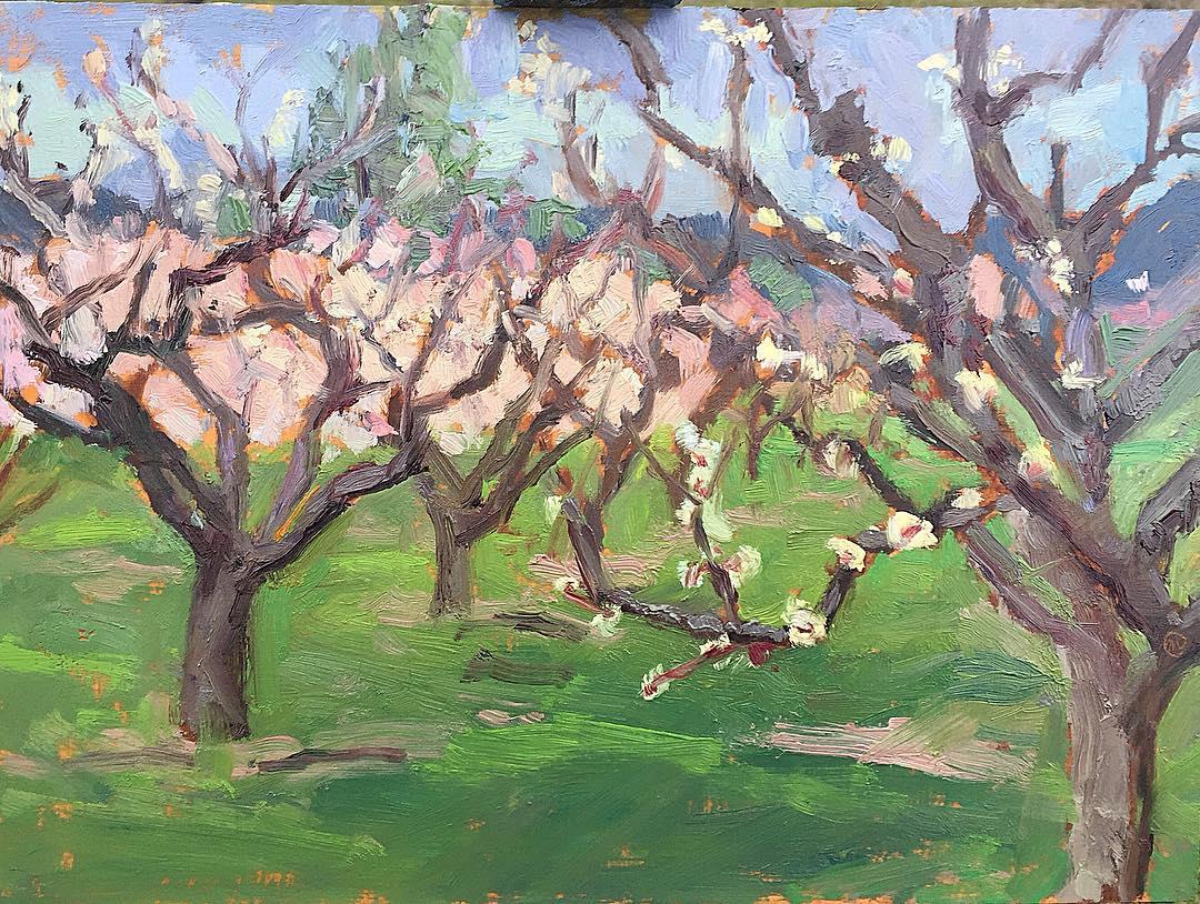 Apricot Blossoms #