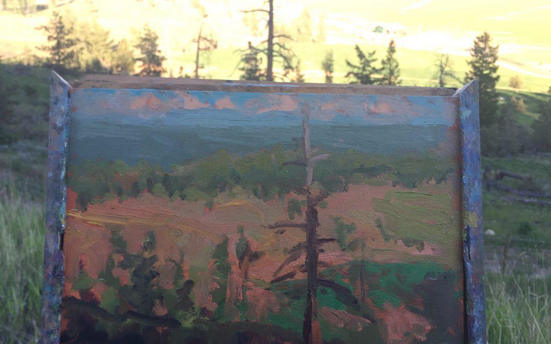 Sun setting on dead pine
